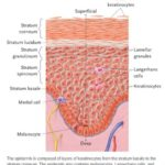 What factors REALLY have an impact on skin health?