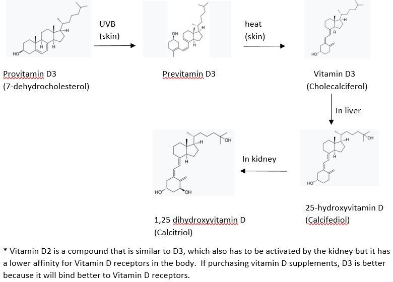 Vitamin D production