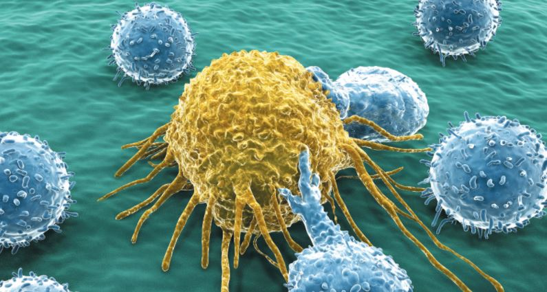 Acquired immune system