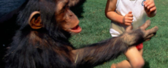 humans and apes are omnivores